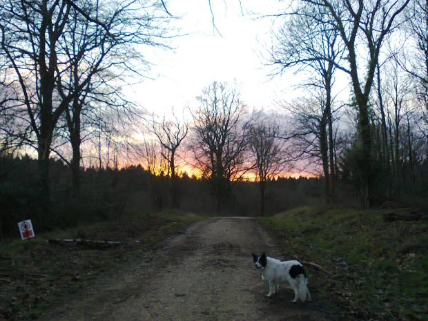 This picture was taken by me as I was walking my border collie, the lovely (but sometimes noisy) Mabel. I used the image in a Hidden Hampshire piece for Chandler's Ford Today. Probably my best photo ever of a sunset.