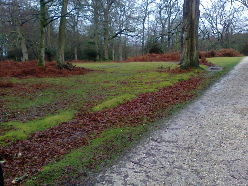 Part of the New Forest in late autumn, image taken by me.