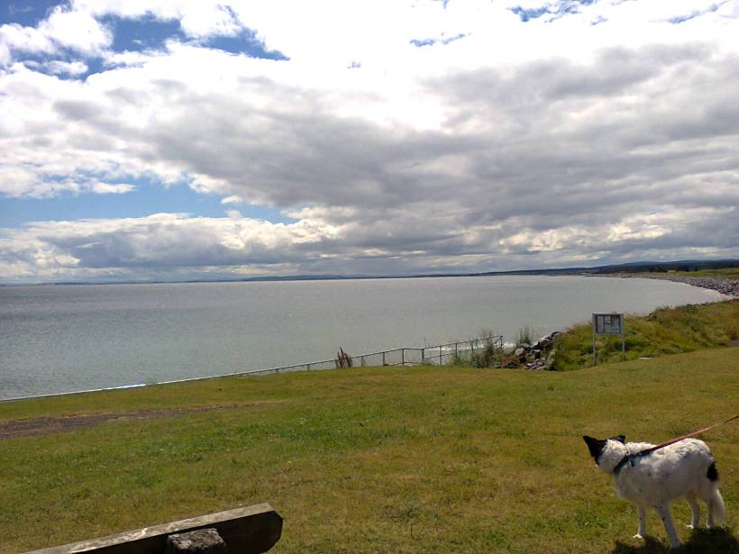 Mabel enjoying the view at Golspie, Northern Scotland. Image by me.