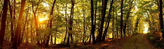 Come sunrise the fairies must vanish. Image via Pixabay.