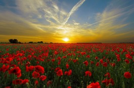 Poetry conjures up images and war poetry conjures up some of the most famous of all. Image via Pixabay (and I think one of the loveliest I've ever shared. Simple but stunning).