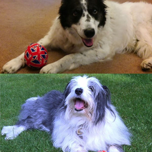 My two girls, both much missed. Mabel, the border collie, left us last week. Gracie, the bearded/border cross, left us five years ago. And yes it is the same ball. They both loved it.