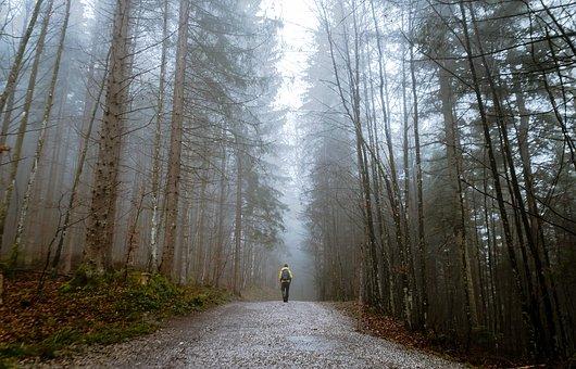 General woodland shot but typical of the Jermyns Lane walk I enjoy. Image via Pixabay