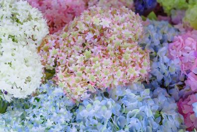 Fake flowers are a boon to hayfever sufferers. Image via Pixabay.