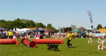 Part of the dog agility course. Image by Allison Symes