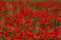 Remembering... image via Pixabay