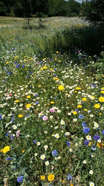 I love the colour combinations in the wildflower meadow