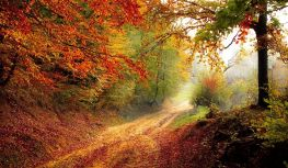 Glorious autumn. Time to take stock briefly and then move on. Pixabay image.
