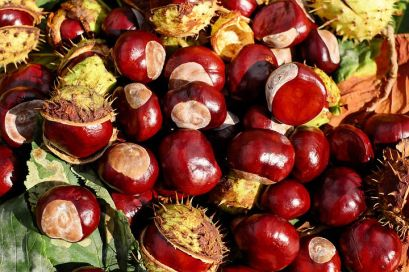 I wonder if the chestnuts will do well in Chandler's Ford this year - Pixabay image