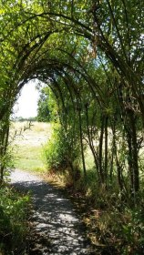 Walking around the grounds at Swanwick is lovely. Image by Allison Symes