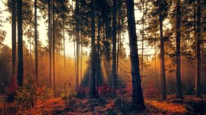 Love the sunshine through the trees. Pixabay image.