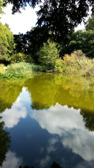 Reflections at Swanwick earlier this year. Image by Allison Symes