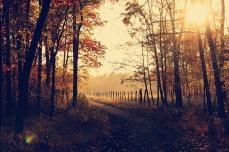 A beautiful woodland walk. Pixabay image