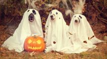 PART 3 - Whatever your view of ghosts, there is something suspicious about these three - Pixabay