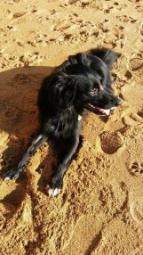 Guess who had a fab time at the beach? Image by Allison Symes
