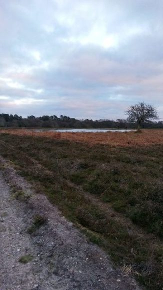 A post Christmas New Forest walk is traditional for me. Image by Allison Symes