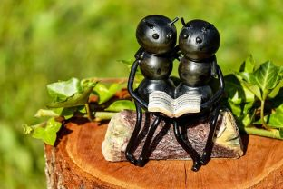 Lovely thought: busy ants taking time out to read. Unlikely though. Pixabay