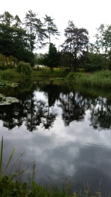 Reflections at Swanwick. Image by Allison Symes
