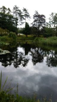 Time to reflect around the lakes at The Hayes, Swanwick. Image by Allison Symes