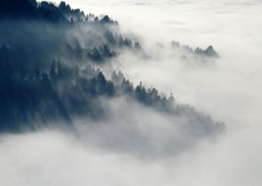 This fog looks beautiful but I don't want to be immersed in the fog of nostalgia - Pixabay