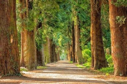I love trees.jpg