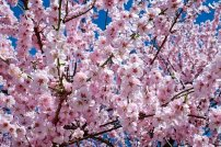 It is fabulous seeing the blossom coming back too though I spare a thought and an antihistamine for the hayfever sufferers