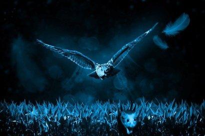 owl-517497_640