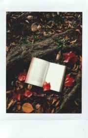Photo by u96e8u661f ameboshi on Pexels.com