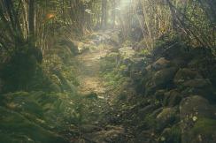 The way to the magical realm - via Pixabay