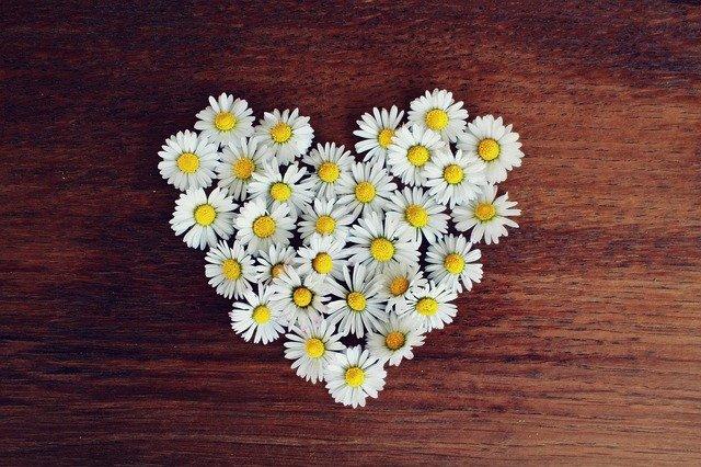 daisy-1403041_640
