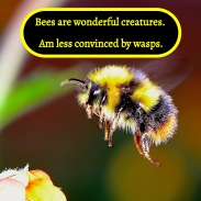 Bees are wonderful