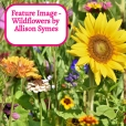 Feature Image - Wildflowers