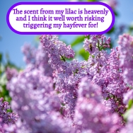 Heavenly lilac